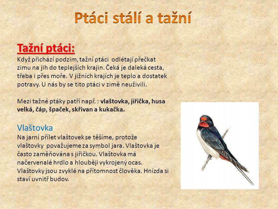 Tažní ptáci: Když přichází podzim, tažní ptáci odlétají přečkat zimu na jih do teplejších krajin. Čeká je daleká cesta, třeba i přes moře. V jižních k