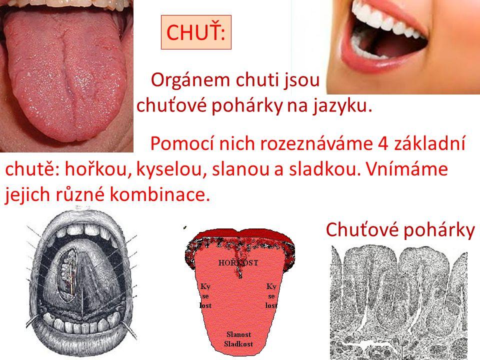 Chuťové pohárky CHUŤ: Orgánem chuti jsou chuťové pohárky na jazyku. Pomocí nich rozeznáváme 4 základní chutě: hořkou, kyselou, slanou a sladkou. Vnímá