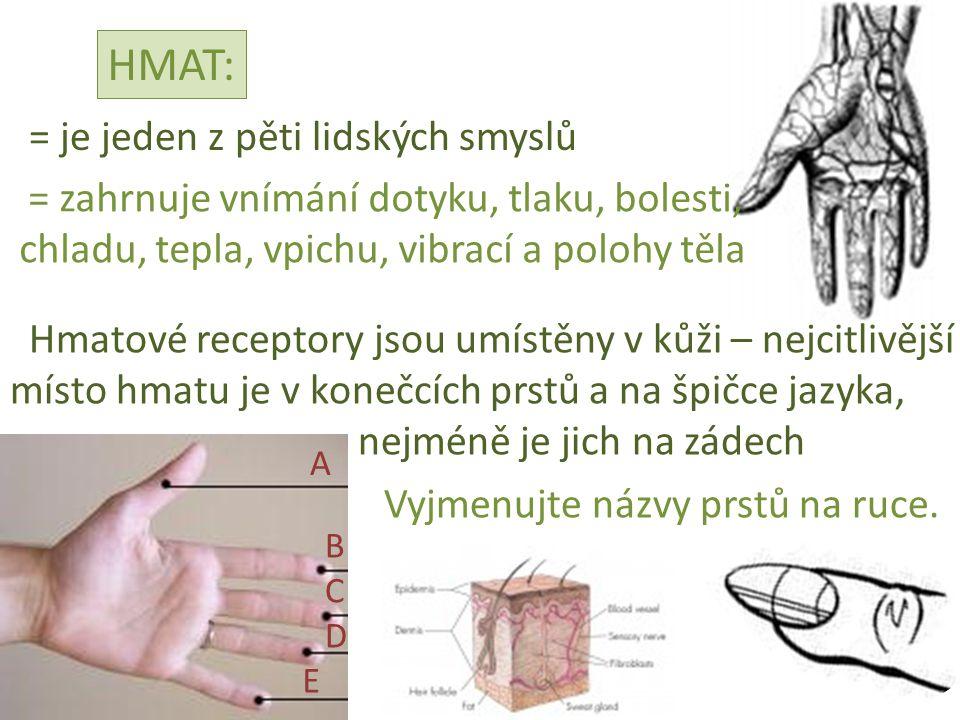 HMAT: = je jeden z pěti lidských smyslů = zahrnuje vnímání dotyku, tlaku, bolesti, chladu, tepla, vpichu, vibrací a polohy těla Hmatové receptory jsou