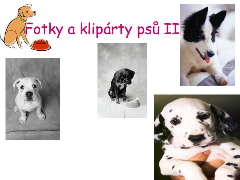 Fotky a klipárty psů II