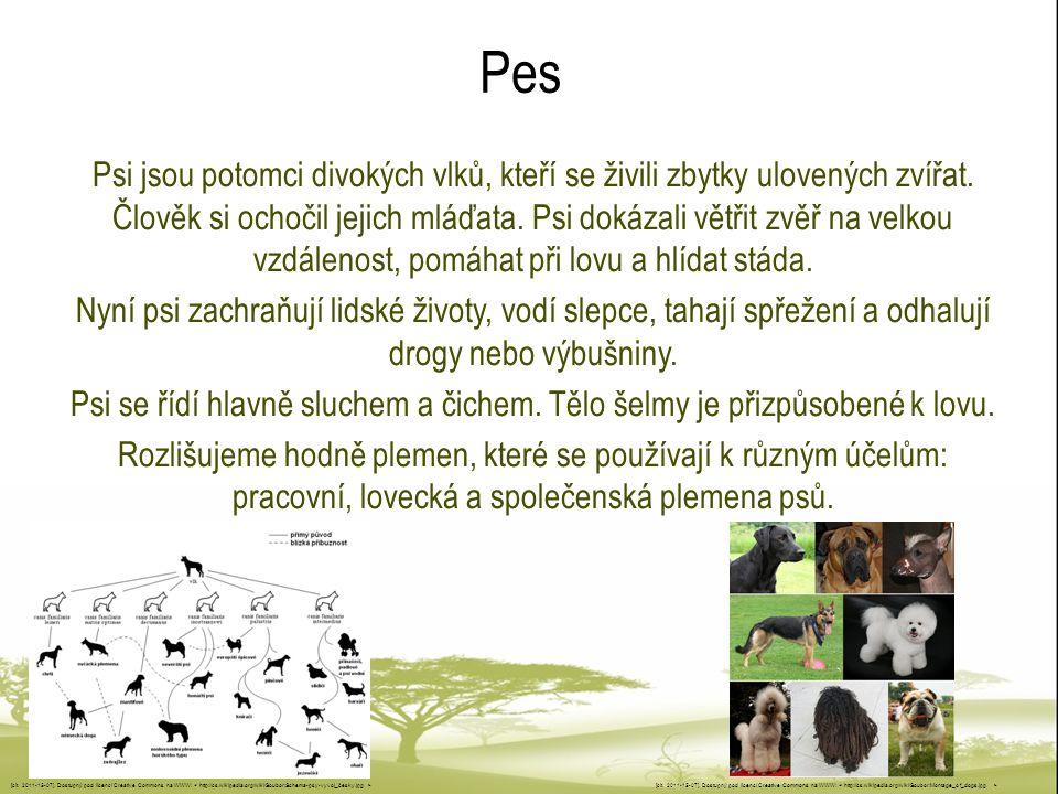Pes Psi jsou potomci divokých vlků, kteří se živili zbytky ulovených zvířat. Člověk si ochočil jejich mláďata. Psi dokázali větřit zvěř na velkou vzdá