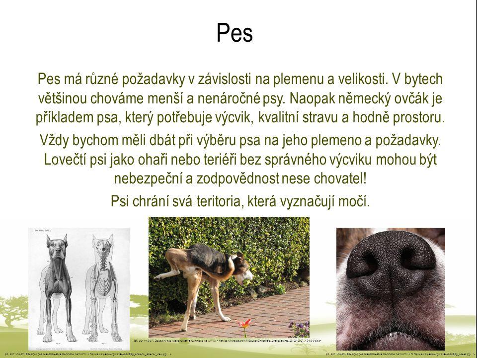 Pes Pes má různé požadavky v závislosti na plemenu a velikosti. V bytech většinou chováme menší a nenáročné psy. Naopak německý ovčák je příkladem psa