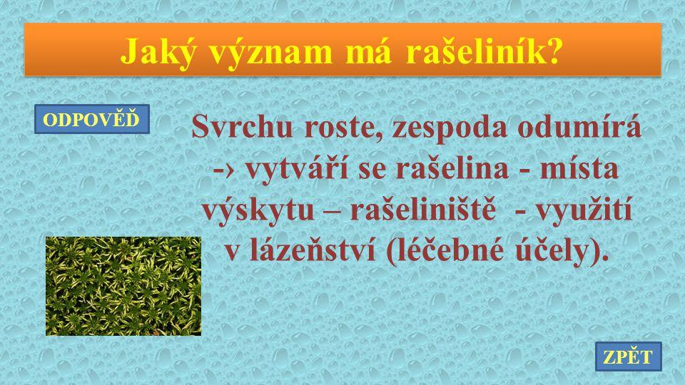Jaký význam má rašeliník? Svrchu roste, zespoda odumírá -› vytváří se rašelina - místa výskytu – rašeliniště - využití v lázeňství (léčebné účely). ZP