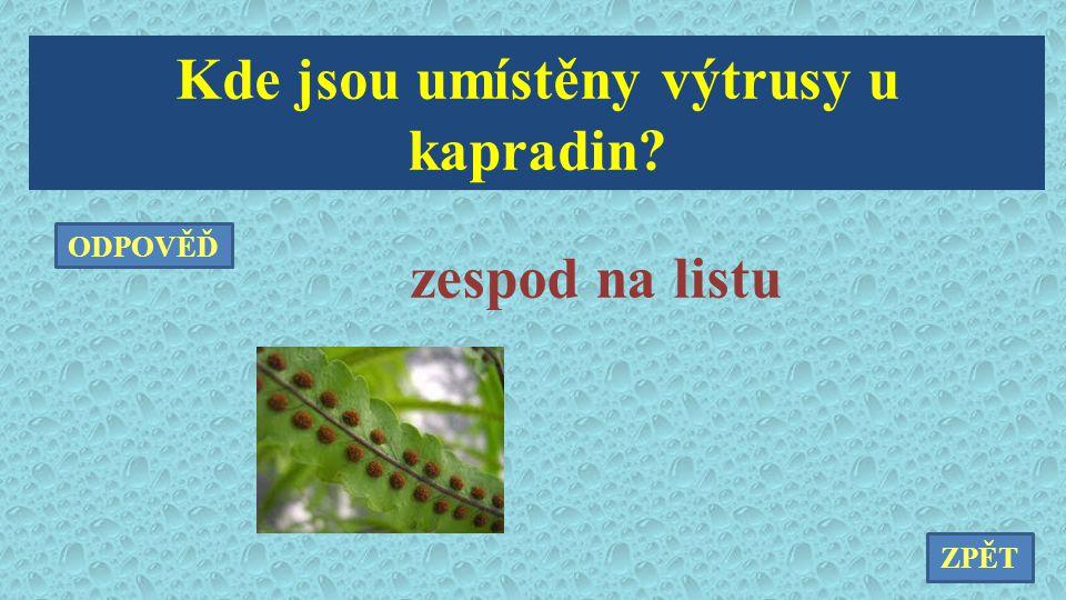 Kde jsou umístěny výtrusy u kapradin? zespod na listu ZPĚT ODPOVĚĎ