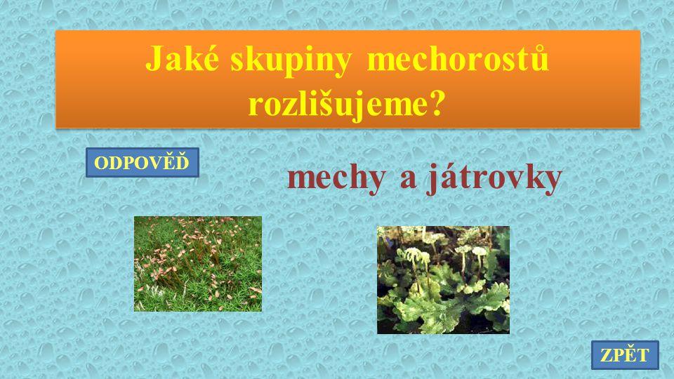 Jaké skupiny kapraďorostů rozlišujeme? kapradiny, přesličky, plavuně ZPĚT ODPOVĚĎ
