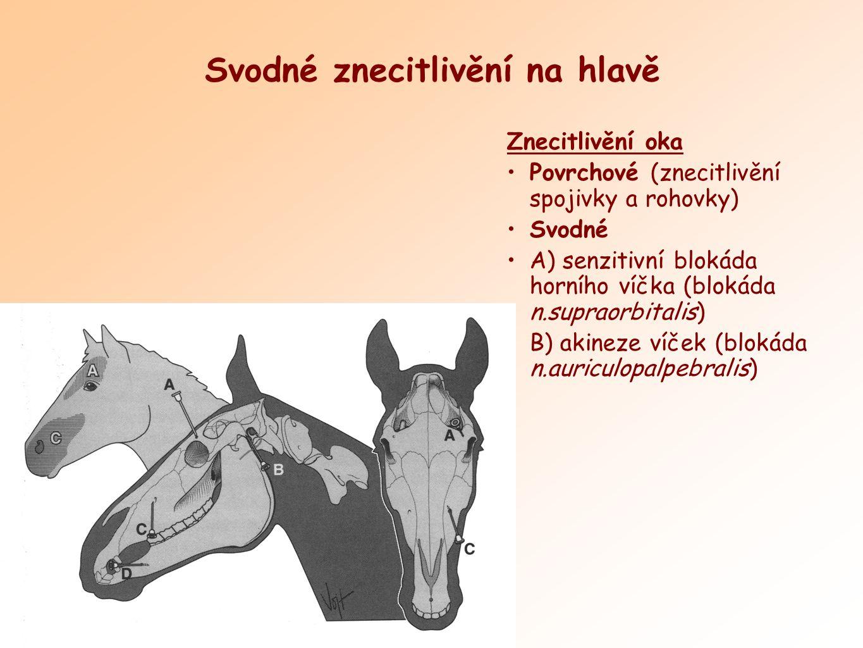Epidurální anestezie Znecitlivění v oblasti anu, perinea, vulvy U skotu malá a velká (kaudální a kraniální) U koně pouze malá epidurální anestezie!!.