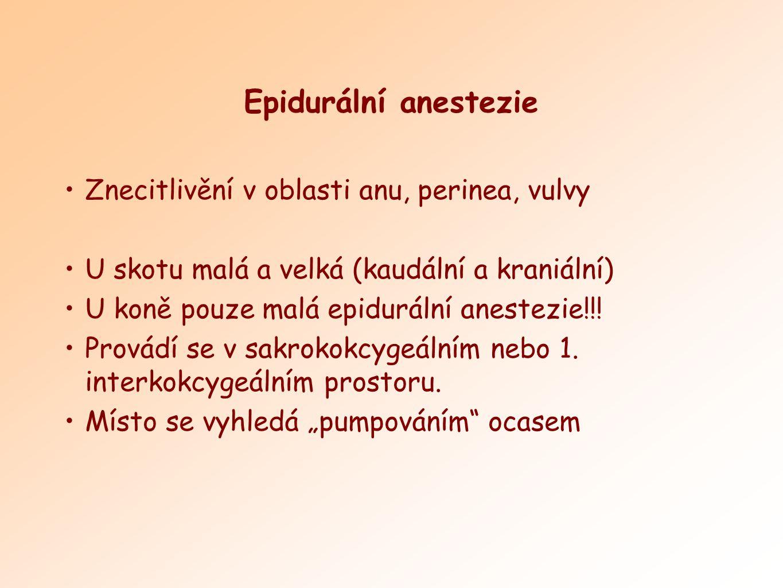 Epidurální anestezie Znecitlivění v oblasti anu, perinea, vulvy U skotu malá a velká (kaudální a kraniální) U koně pouze malá epidurální anestezie!!!