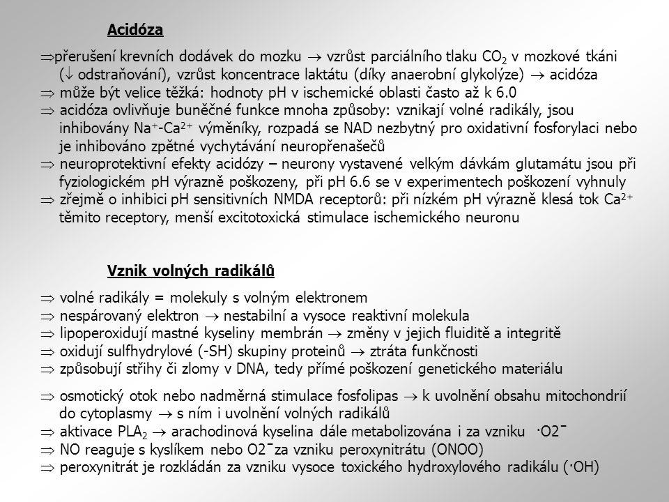 Acidóza  přerušení krevních dodávek do mozku  vzrůst parciálního tlaku CO 2 v mozkové tkáni (  odstraňování), vzrůst koncentrace laktátu (díky anaerobní glykolýze)  acidóza  může být velice těžká: hodnoty pH v ischemické oblasti často až k 6.0  acidóza ovlivňuje buněčné funkce mnoha způsoby: vznikají volné radikály, jsou inhibovány Na + -Ca 2+ výměníky, rozpadá se NAD nezbytný pro oxidativní fosforylaci nebo je inhibováno zpětné vychytávání neuropřenašečů  neuroprotektivní efekty acidózy – neurony vystavené velkým dávkám glutamátu jsou při fyziologickém pH výrazně poškozeny, při pH 6.6 se v experimentech poškození vyhnuly  zřejmě o inhibici pH sensitivních NMDA receptorů: při nízkém pH výrazně klesá tok Ca 2+ těmito receptory, menší excitotoxická stimulace ischemického neuronu Vznik volných radikálů  volné radikály = molekuly s volným elektronem  nespárovaný elektron  nestabilní a vysoce reaktivní molekula  lipoperoxidují mastné kyseliny membrán  změny v jejich fluiditě a integritě  oxidují sulfhydrylové (-SH) skupiny proteinů  ztráta funkčnosti  způsobují střihy či zlomy v DNA, tedy přímé poškození genetického materiálu  osmotický otok nebo nadměrná stimulace fosfolipas  k uvolnění obsahu mitochondrií do cytoplasmy  s ním i uvolnění volných radikálů  aktivace PLA 2  arachodinová kyselina dále metabolizována i za vzniku ·O2ˉ  NO reaguje s kyslíkem nebo O2ˉza vzniku peroxynitrátu (ONOO)  peroxynitrát je rozkládán za vzniku vysoce toxického hydroxylového radikálu (·OH)