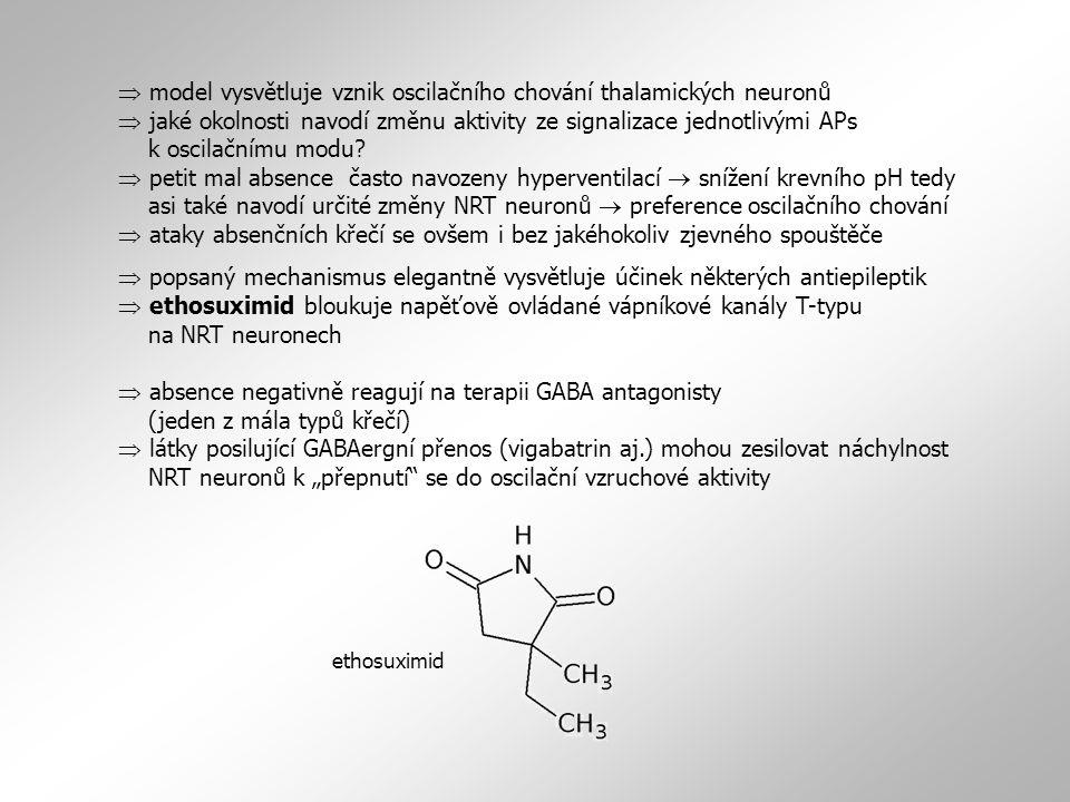  model vysvětluje vznik oscilačního chování thalamických neuronů  jaké okolnosti navodí změnu aktivity ze signalizace jednotlivými APs k oscilačnímu modu.