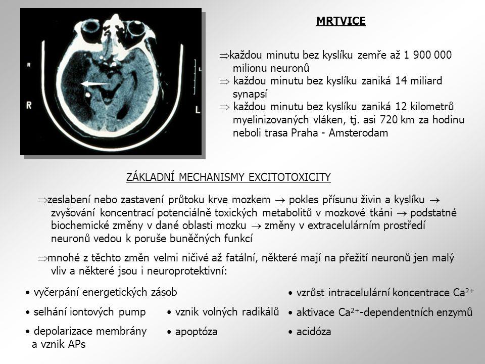 MRTVICE  každou minutu bez kyslíku zemře až 1 900 000 milionu neuronů  každou minutu bez kyslíku zaniká 14 miliard synapsí  každou minutu bez kyslíku zaniká 12 kilometrů myelinizovaných vláken, tj.