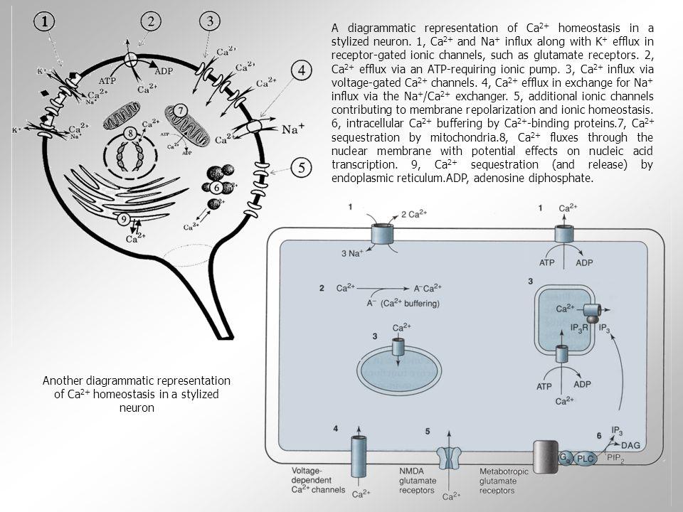 Vznik křečí  normálním bdělý stav bez alterace vědomí: na EEG záznamu objevuje několik málo typů vln a žádné výrazné posuvy v polaritě záznamu  !!.
