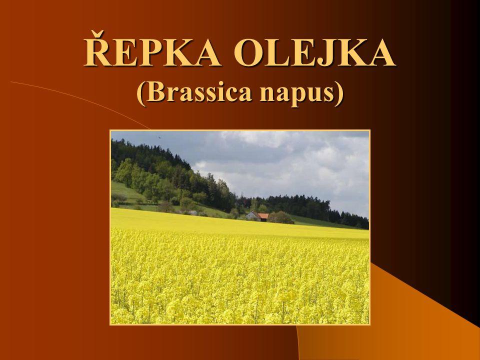 SOŠS a SOU KadaňOlejniny - Řepka olejka2 Hospodářský význam řepky olejky  V ČR je to hlavní olejnina.