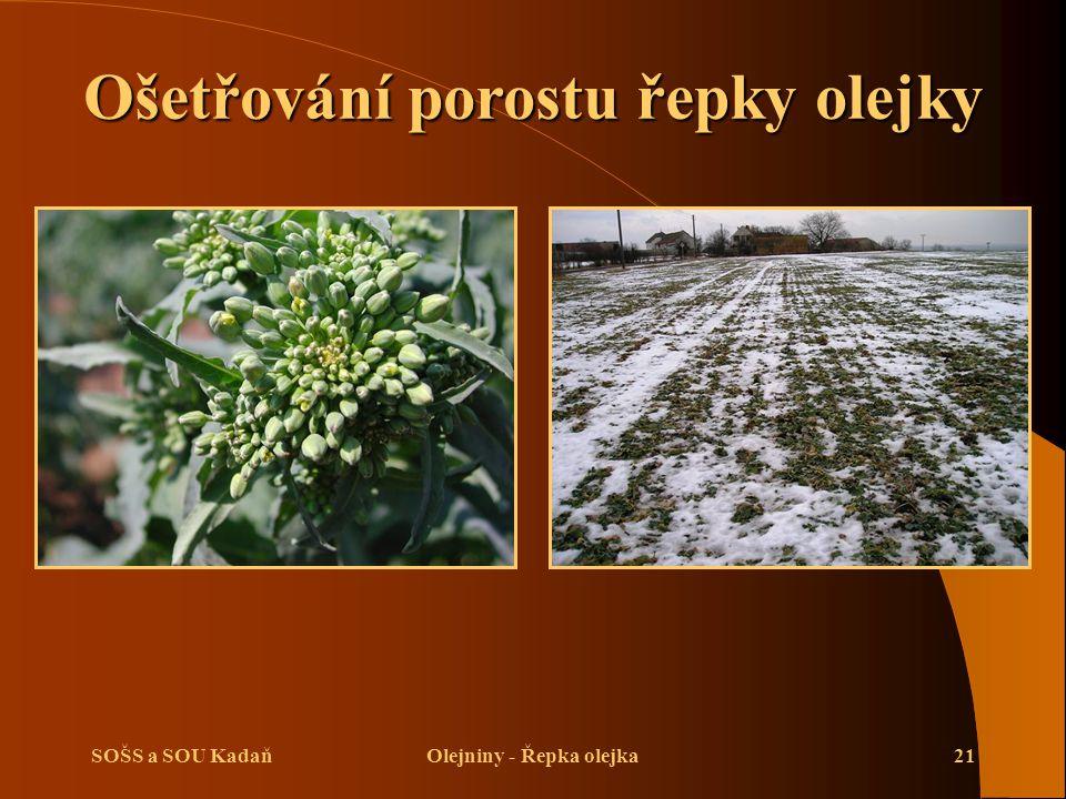 SOŠS a SOU KadaňOlejniny - Řepka olejka21 Ošetřování porostu řepky olejky