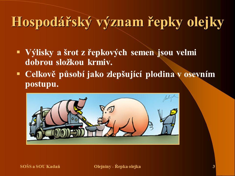 SOŠS a SOU KadaňOlejniny - Řepka olejka24 Opakování  Vysvětlete hospodářský význam řepky.