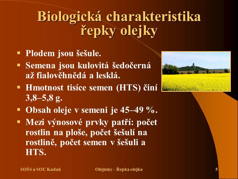 SOŠS a SOU KadaňOlejniny - Řepka olejka5  Plodem jsou šešule.  Semena jsou kulovitá šedočerná až fialověhnědá a lesklá.  Hmotnost tisíce semen (HTS
