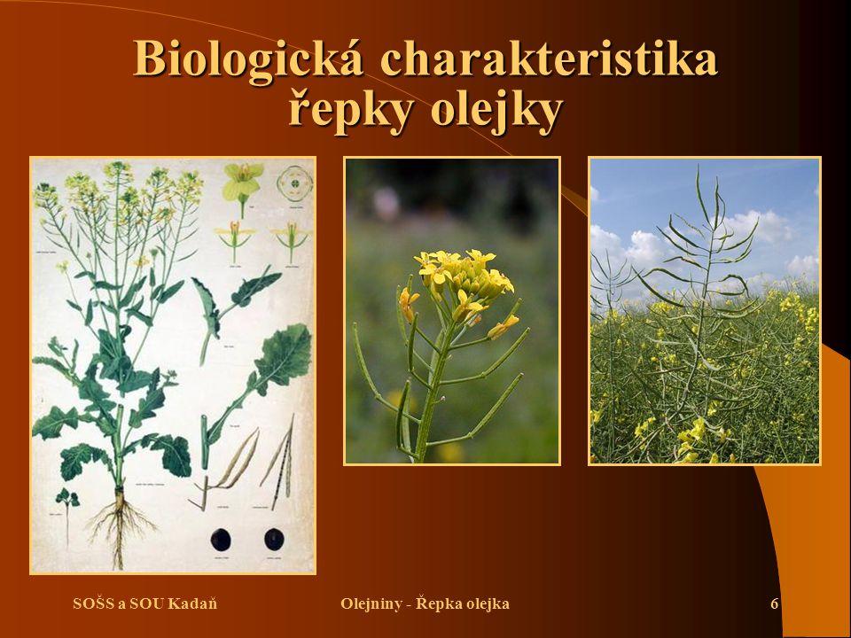 SOŠS a SOU KadaňOlejniny - Řepka olejka7 Biologická charakteristika řepky olejky