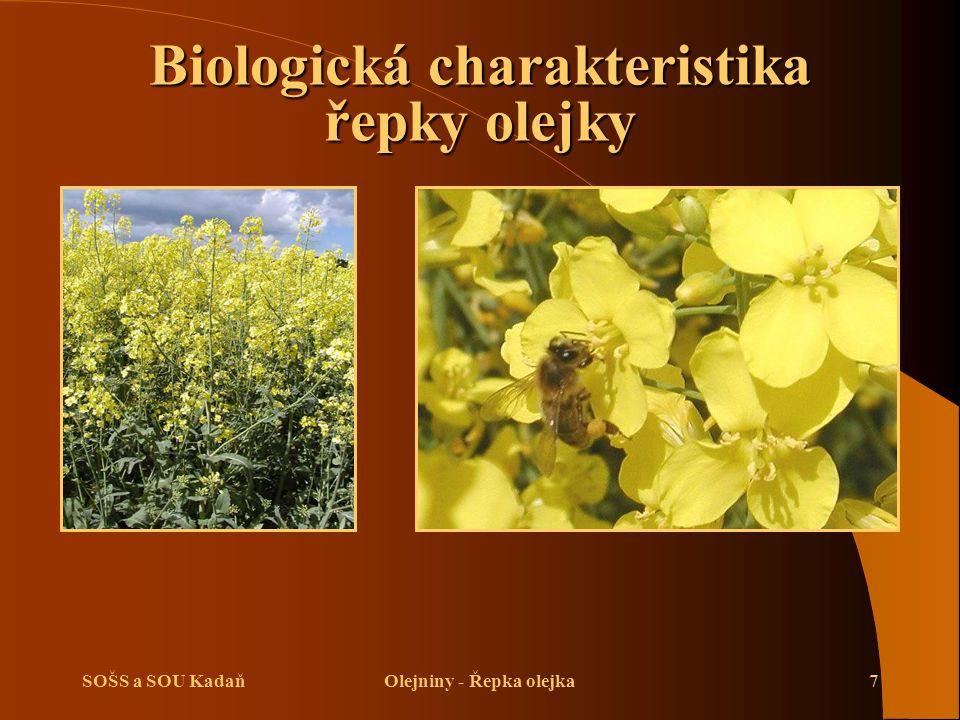 SOŠS a SOU KadaňOlejniny - Řepka olejka8 Nároky na prostředí řepky olejky  Řepce vyhovují bramborářské výrobní oblasti s ročními srážkami 500–700 mm a teplotou 6,5–8,5 °C.