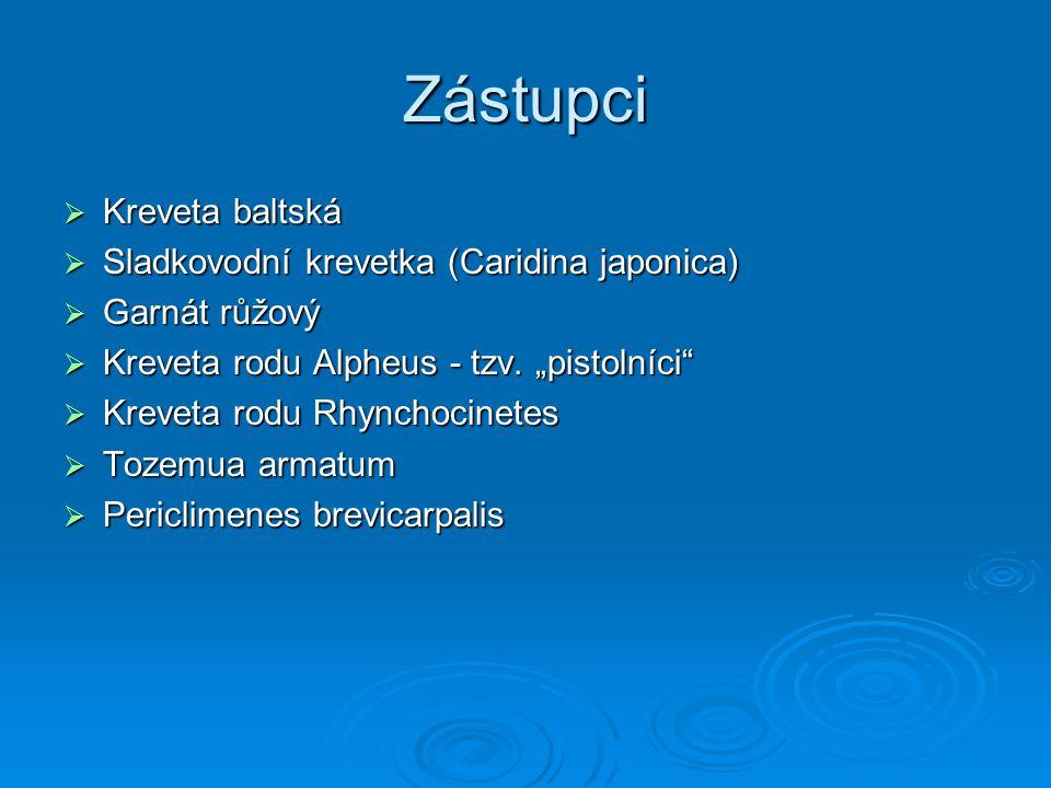 "Zástupci  Kreveta baltská  Sladkovodní krevetka (Caridina japonica)  Garnát růžový  Kreveta rodu Alpheus - tzv. ""pistolníci""  Kreveta rodu Rhynch"