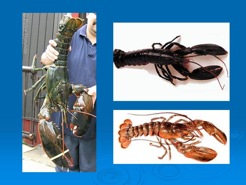 Zdroje  www.google.com www.google.com  www.gnosis9.net www.gnosis9.net