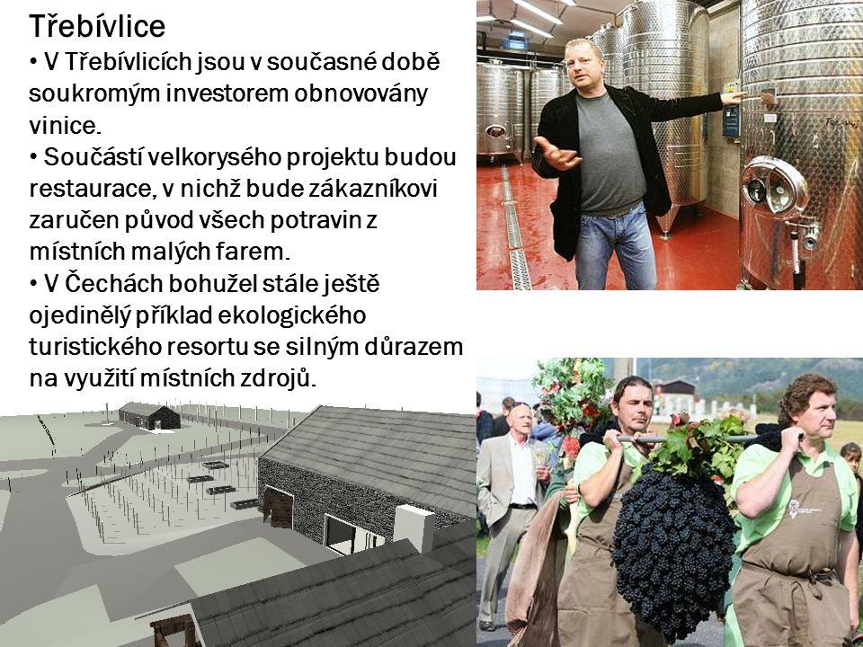 Třebívlice V Třebívlicích jsou v současné době soukromým investorem obnovovány vinice. Součástí velkorysého projektu budou restaurace, v nichž bude zá