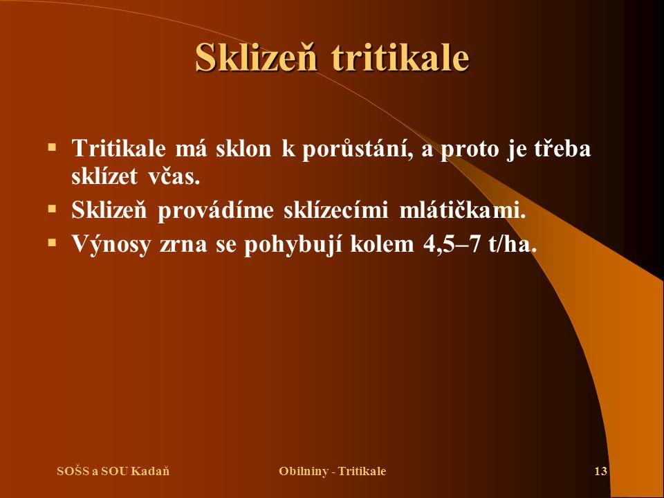 SOŠS a SOU KadaňObilniny - Tritikale13 Sklizeň tritikale  Tritikale má sklon k porůstání, a proto je třeba sklízet včas.  Sklizeň provádíme sklízecí