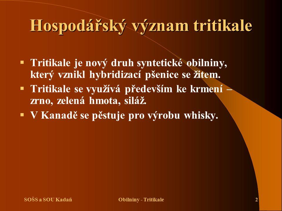 SOŠS a SOU KadaňObilniny - Tritikale2 Hospodářský význam tritikale  Tritikale je nový druh syntetické obilniny, který vznikl hybridizací pšenice se ž