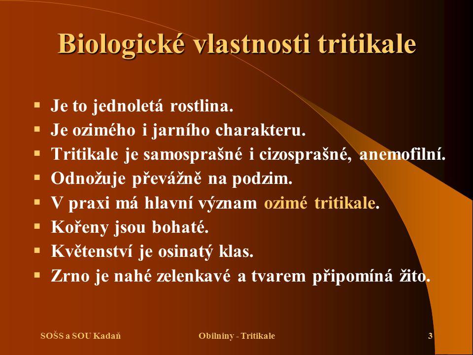 SOŠS a SOU KadaňObilniny - Tritikale3 Biologické vlastnosti tritikale  Je to jednoletá rostlina.  Je ozimého i jarního charakteru.  Tritikale je sa