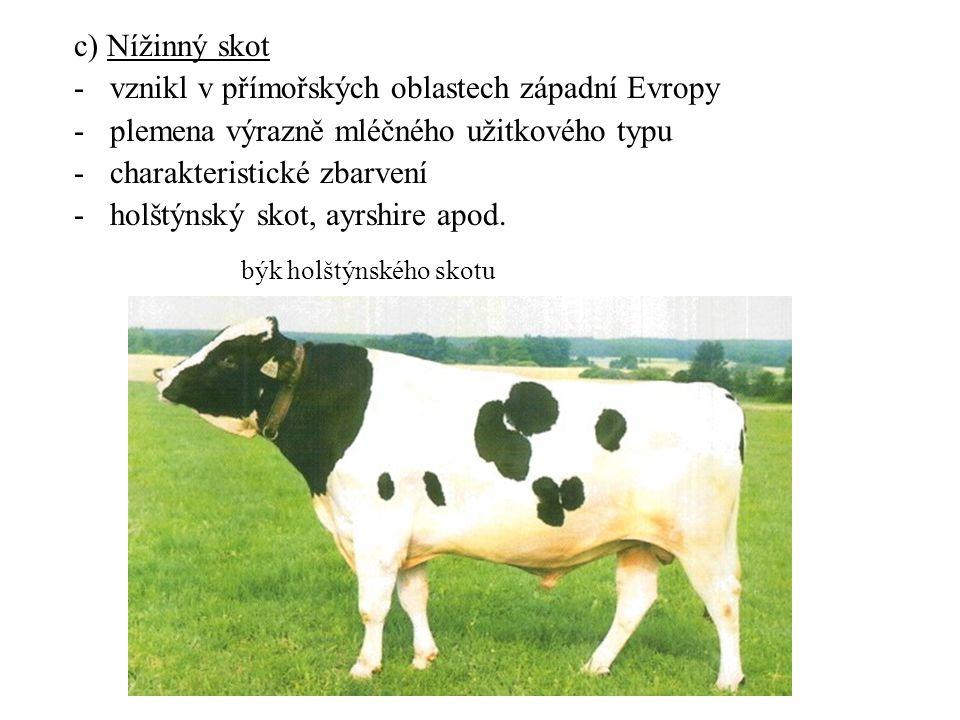 c) Nížinný skot -vznikl v přímořských oblastech západní Evropy -plemena výrazně mléčného užitkového typu -charakteristické zbarvení -holštýnský skot,