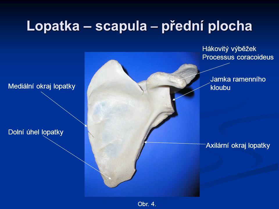 Lopatka – scapula – přední plocha Mediální okraj lopatky Axilární okraj lopatky Dolní úhel lopatky Hákovitý výběžek Processus coracoideus Jamka ramenn