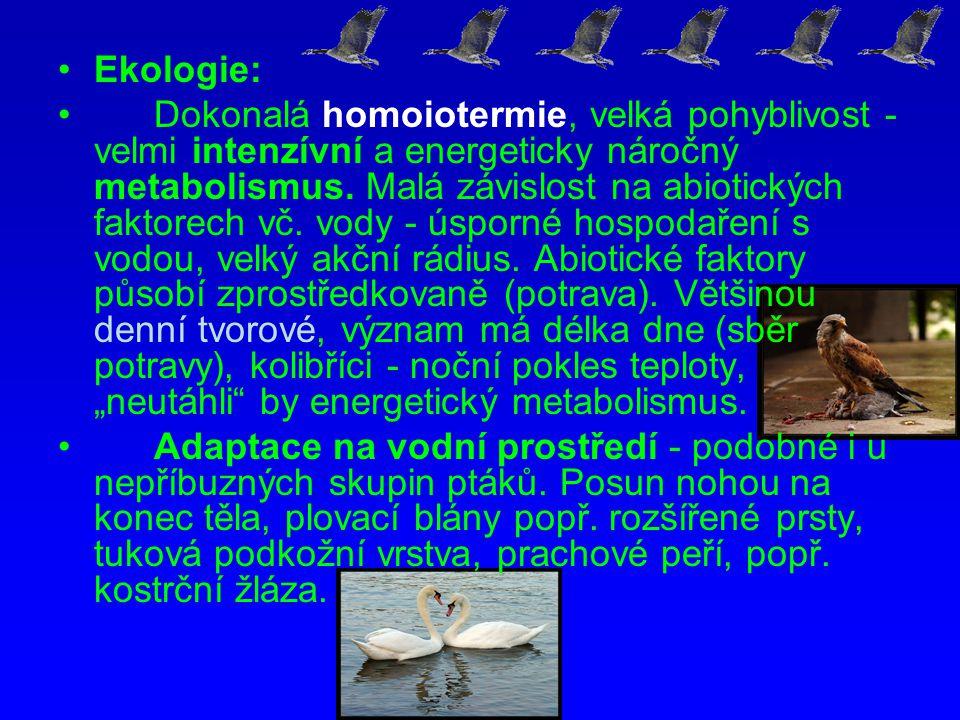 Ekologie: Dokonalá homoiotermie, velká pohyblivost - velmi intenzívní a energeticky náročný metabolismus. Malá závislost na abiotických faktorech vč.