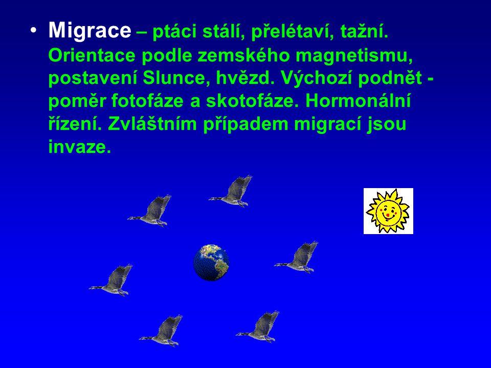 Migrace – ptáci stálí, přelétaví, tažní. Orientace podle zemského magnetismu, postavení Slunce, hvězd. Výchozí podnět - poměr fotofáze a skotofáze. Ho