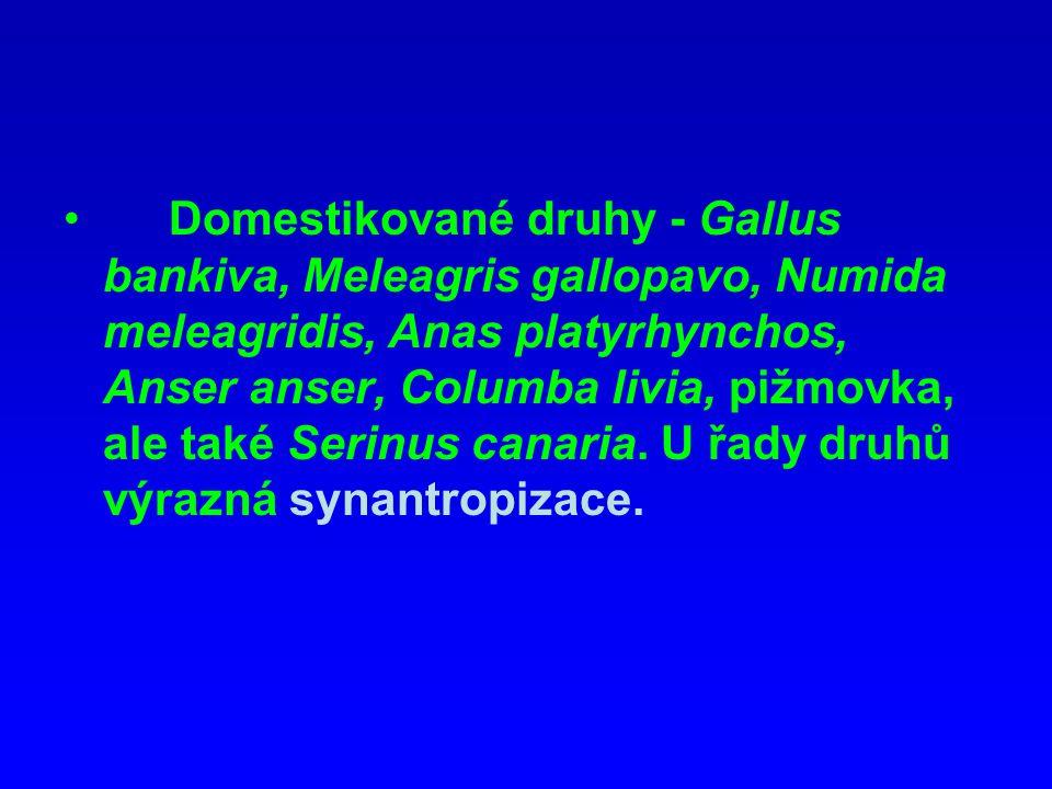 Domestikované druhy - Gallus bankiva, Meleagris gallopavo, Numida meleagridis, Anas platyrhynchos, Anser anser, Columba livia, pižmovka, ale také Seri