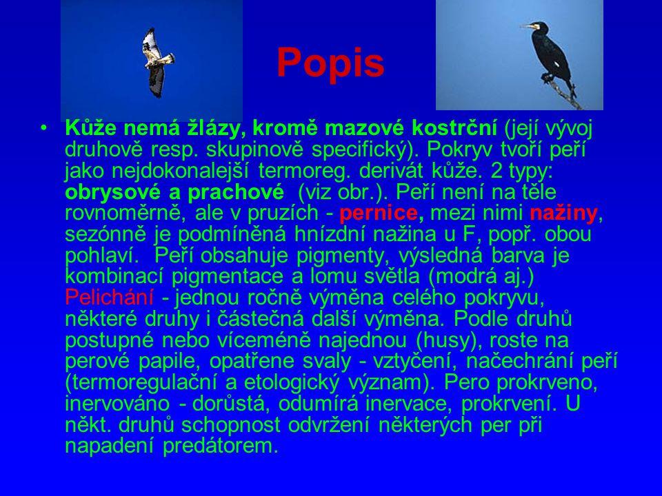 http://www.balios.cz
