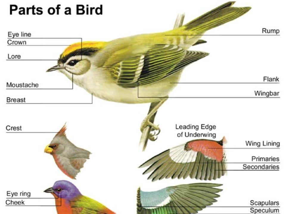 Migrace – ptáci stálí, přelétaví, tažní.