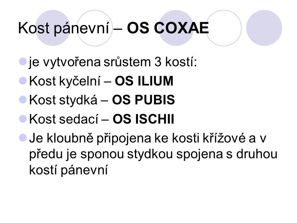 Kost pánevní – OS COXAE je vytvořena srůstem 3 kostí: Kost kyčelní – OS ILIUM Kost stydká – OS PUBIS Kost sedací – OS ISCHII Je kloubně připojena ke k