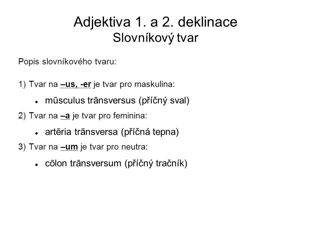 Adjektiva 1. a 2. deklinace Slovníkový tvar Popis slovníkového tvaru: 1)Tvar na –us, -er je tvar pro maskulina: mūsculus trānsversus (příčný sval) 2)T