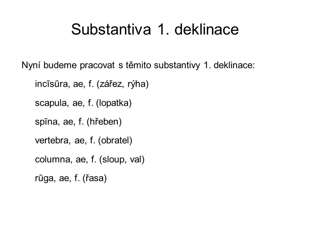 Substantiva 1. deklinace Nyní budeme pracovat s těmito substantivy 1. deklinace: incīsūra, ae, f. (zářez, rýha) scapula, ae, f. (lopatka) spīna, ae, f