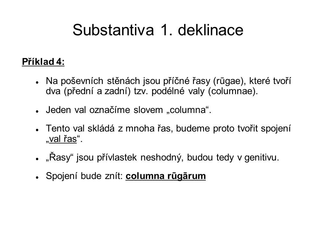 Substantiva 1. deklinace Příklad 4: Na poševních stěnách jsou příčné řasy (rūgae), které tvoří dva (přední a zadní) tzv. podélné valy (columnae). Jede
