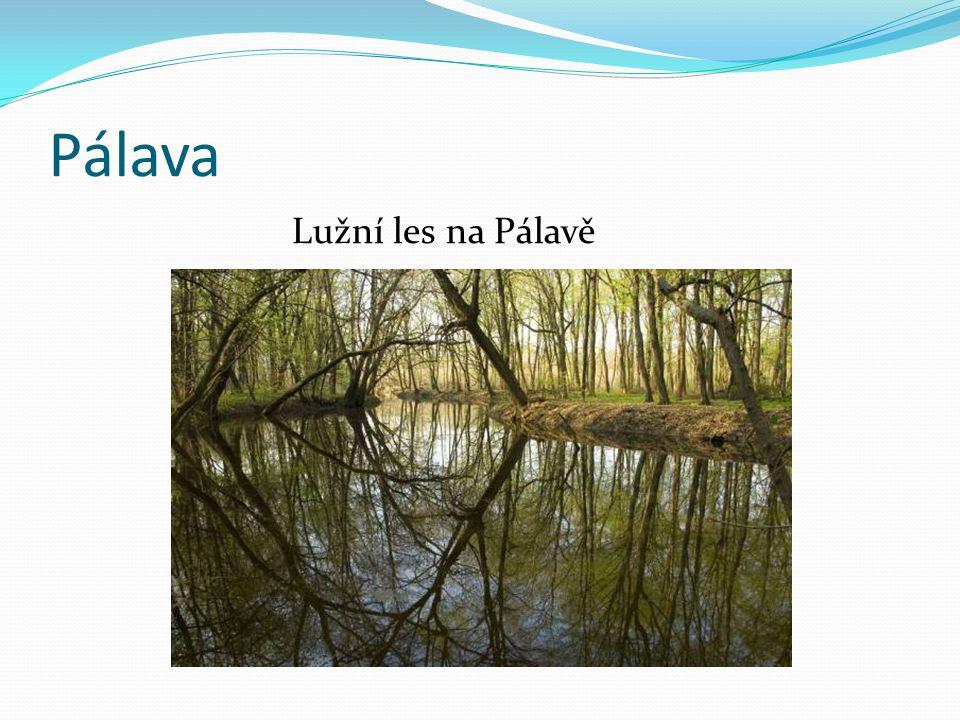 Pálava Lužní les na Pálavě