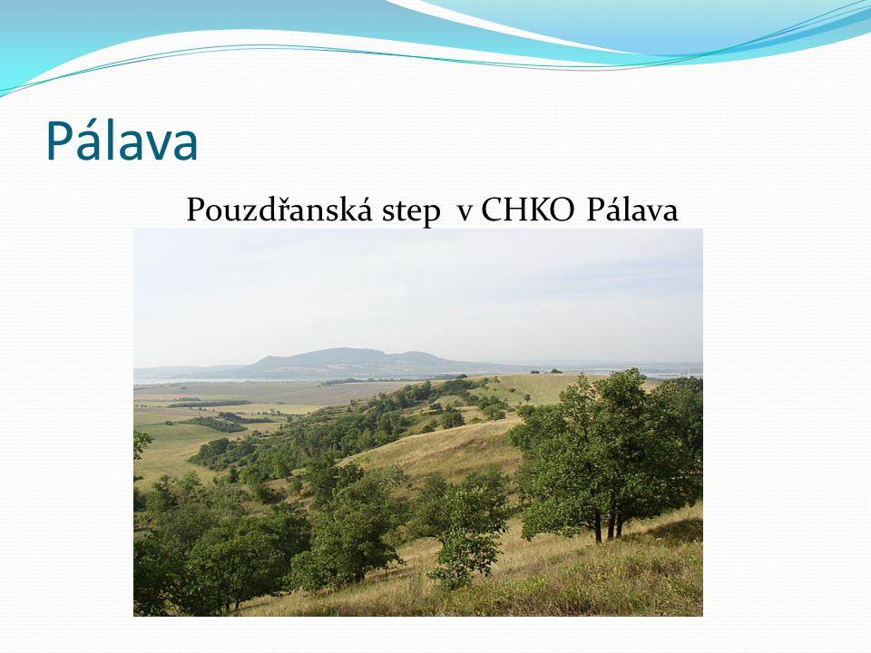 Pálava Pouzdřanská step v CHKO Pálava