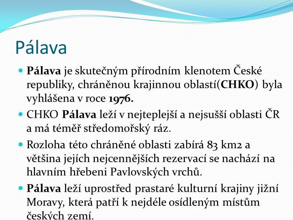 Pálava je skutečným přírodním klenotem České republiky, chráněnou krajinnou oblastí(CHKO) byla vyhlášena v roce 1976.