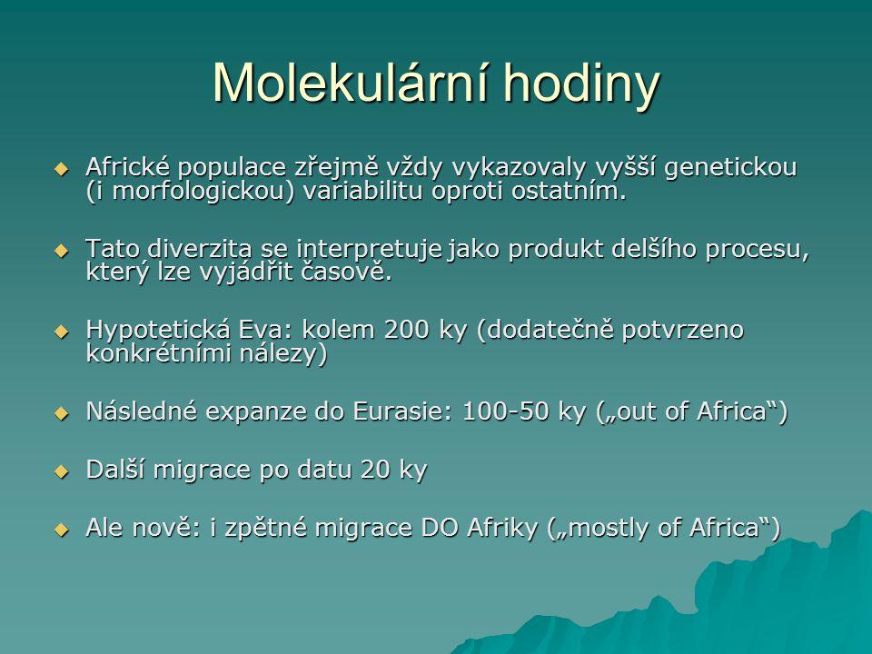Molekulární hodiny  Africké populace zřejmě vždy vykazovaly vyšší genetickou (i morfologickou) variabilitu oproti ostatním.