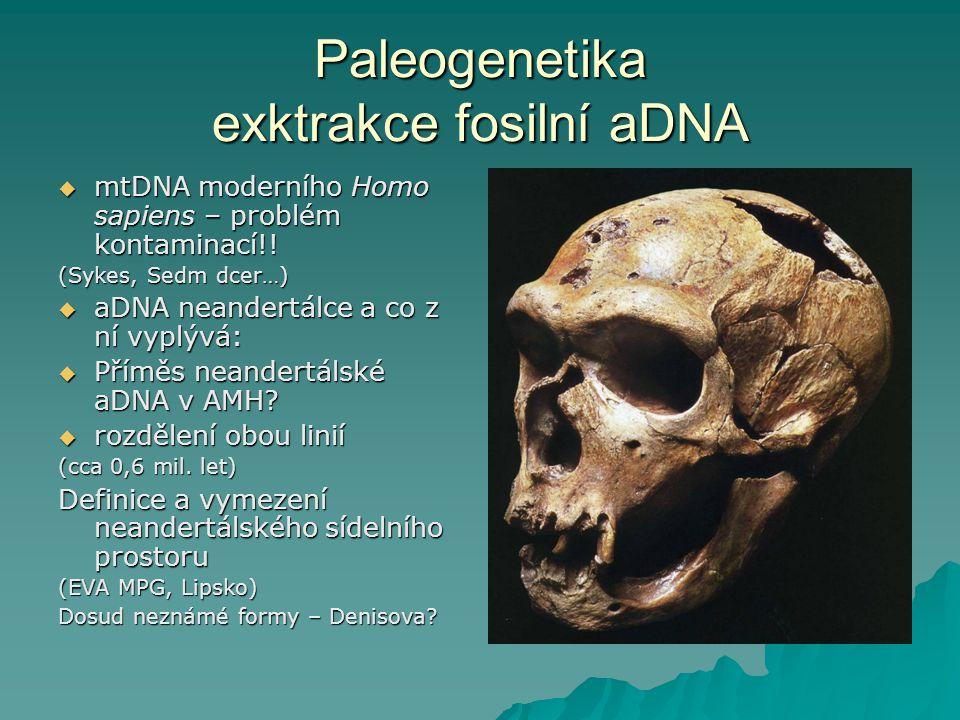 Paleogenetika exktrakce fosilní aDNA  mtDNA moderního Homo sapiens – problém kontaminací!.