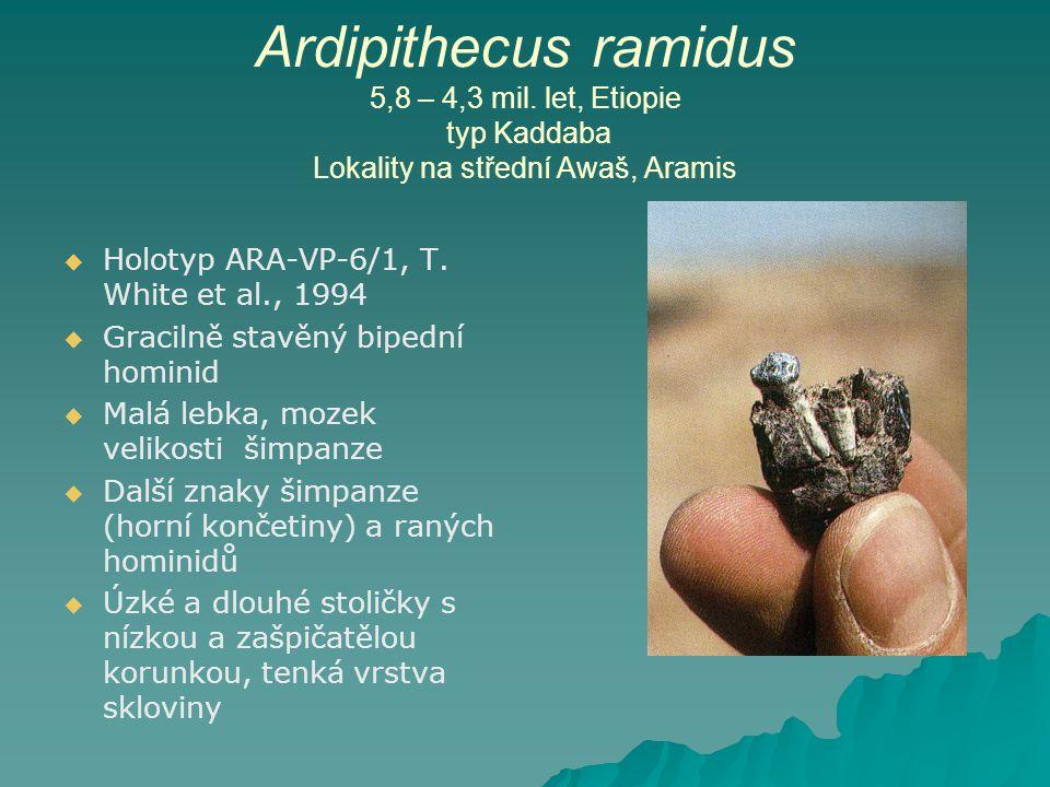 Ardipithecus ramidus 5,8 – 4,3 mil.