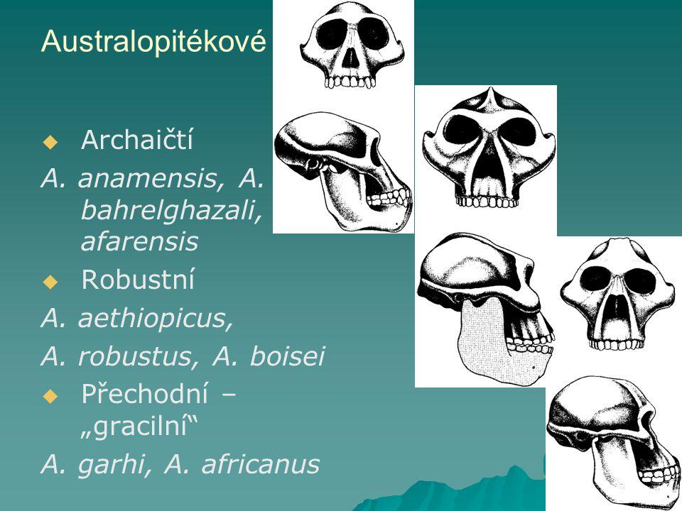 Australopitékové   Archaičtí A.anamensis, A. bahrelghazali, A.