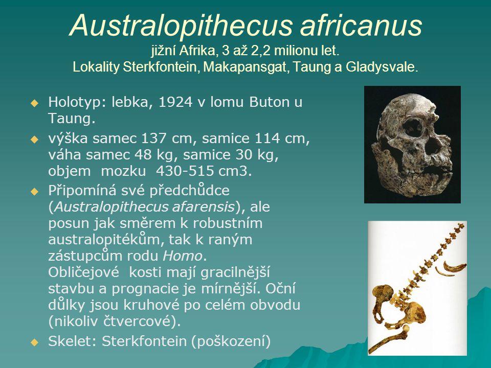 Australopithecus africanus jižní Afrika, 3 až 2,2 milionu let.
