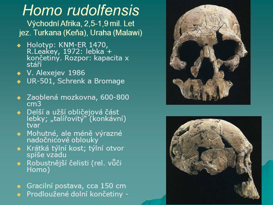 Homo rudolfensis Východní Afrika, 2,5-1,9 mil.Let jez.