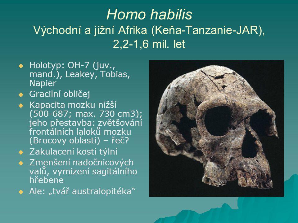 Homo habilis Východní a jižní Afrika (Keňa-Tanzanie-JAR), 2,2-1,6 mil.
