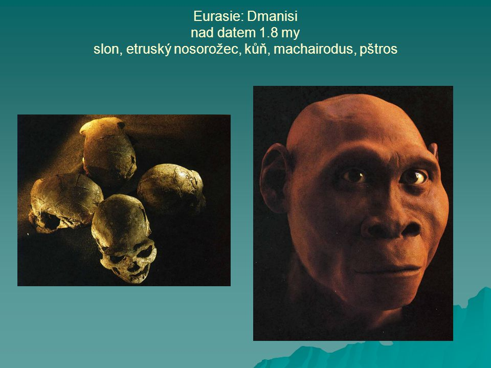 Eurasie: Dmanisi nad datem 1.8 my slon, etruský nosorožec, kůň, machairodus, pštros
