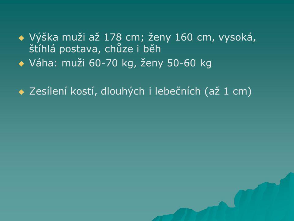   Výška muži až 178 cm; ženy 160 cm, vysoká, štíhlá postava, chůze i běh   Váha: muži 60-70 kg, ženy 50-60 kg   Zesílení kostí, dlouhých i lebečních (až 1 cm)